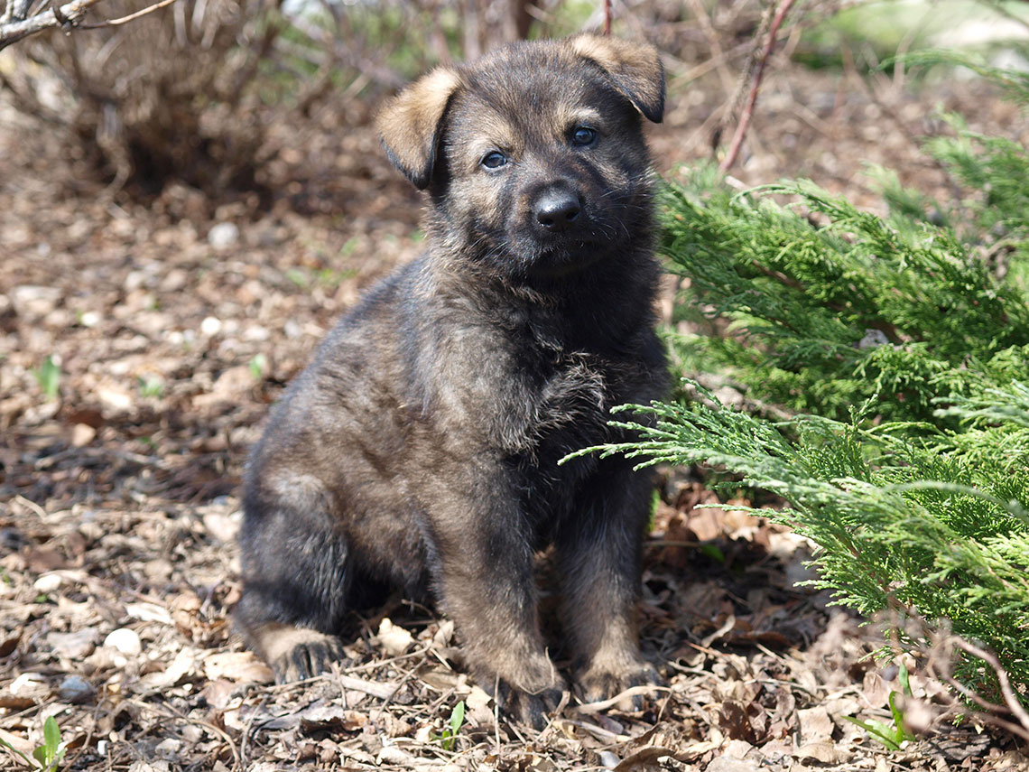 Your Kids Can Help Name Future Police Dogs